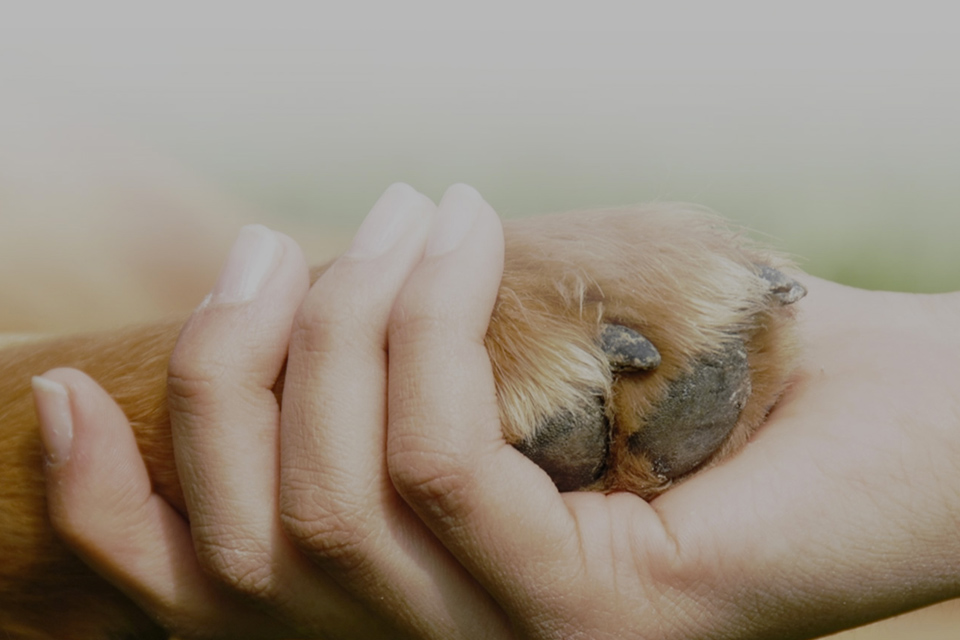 la cremazione degli animali intesa come gesto d'affetto verso i nostri amici a quattro zampe