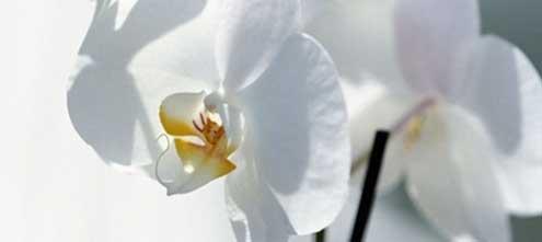 i fiori sono uno dei principali articoli funebri
